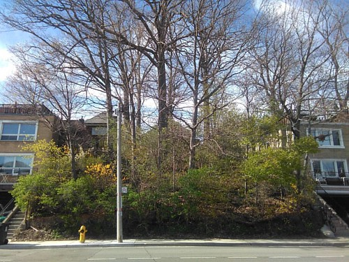 Hill cresting #toronto #davenportroad #bracondalehill #hillcrest #trees #hill