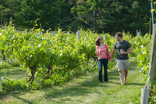 Nashoba Valley Vineyard | by Massachusetts Office of Travel & Tourism