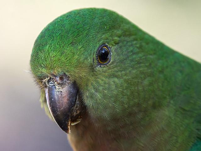 Parrot Eyes South Padre Island Menu