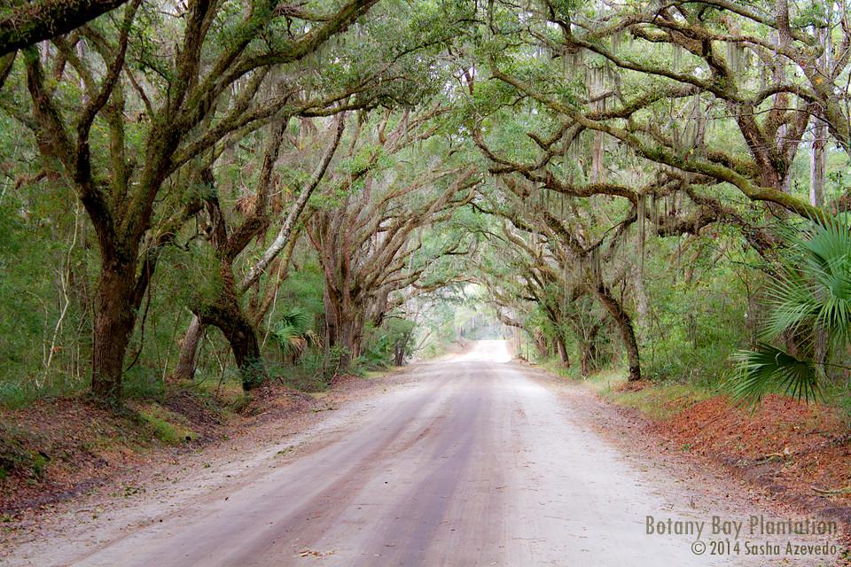 Botany Bay Edisto Beach South Carolina