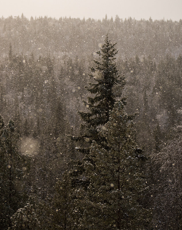 Snowfall over the forest