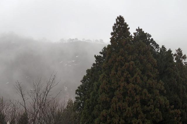 霧の流れる山肌_201704_NO2