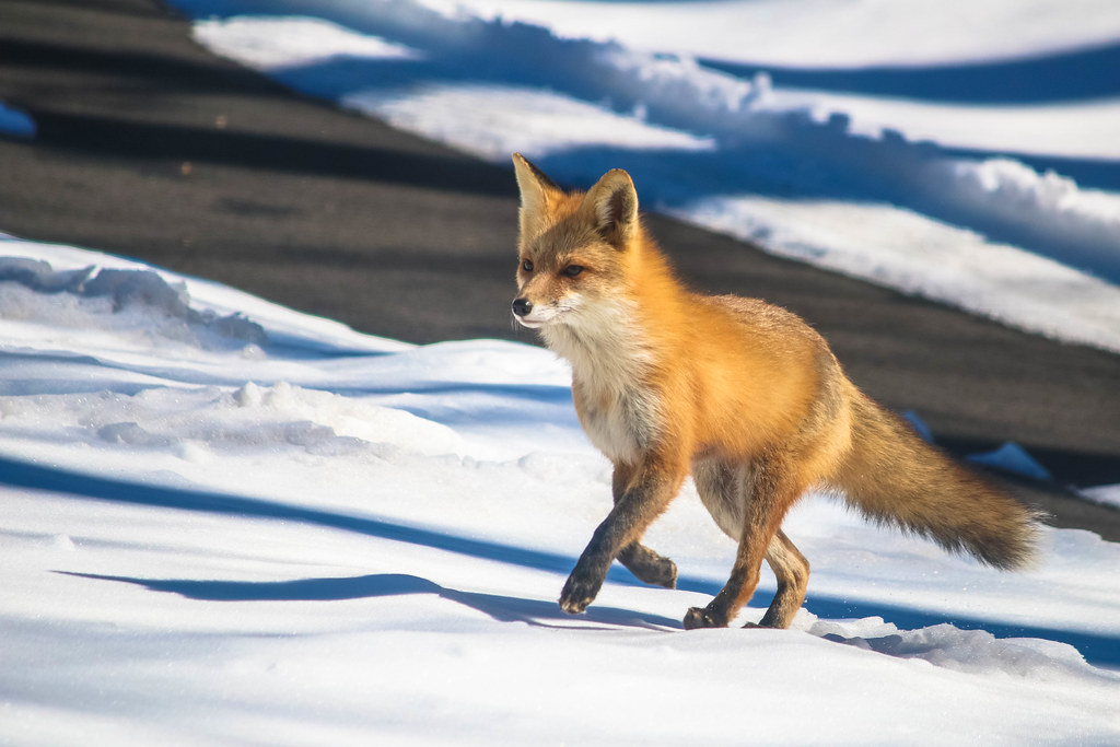 Macro Monday Brings Fox Floof, Schedule Updates, And Vet Bills
