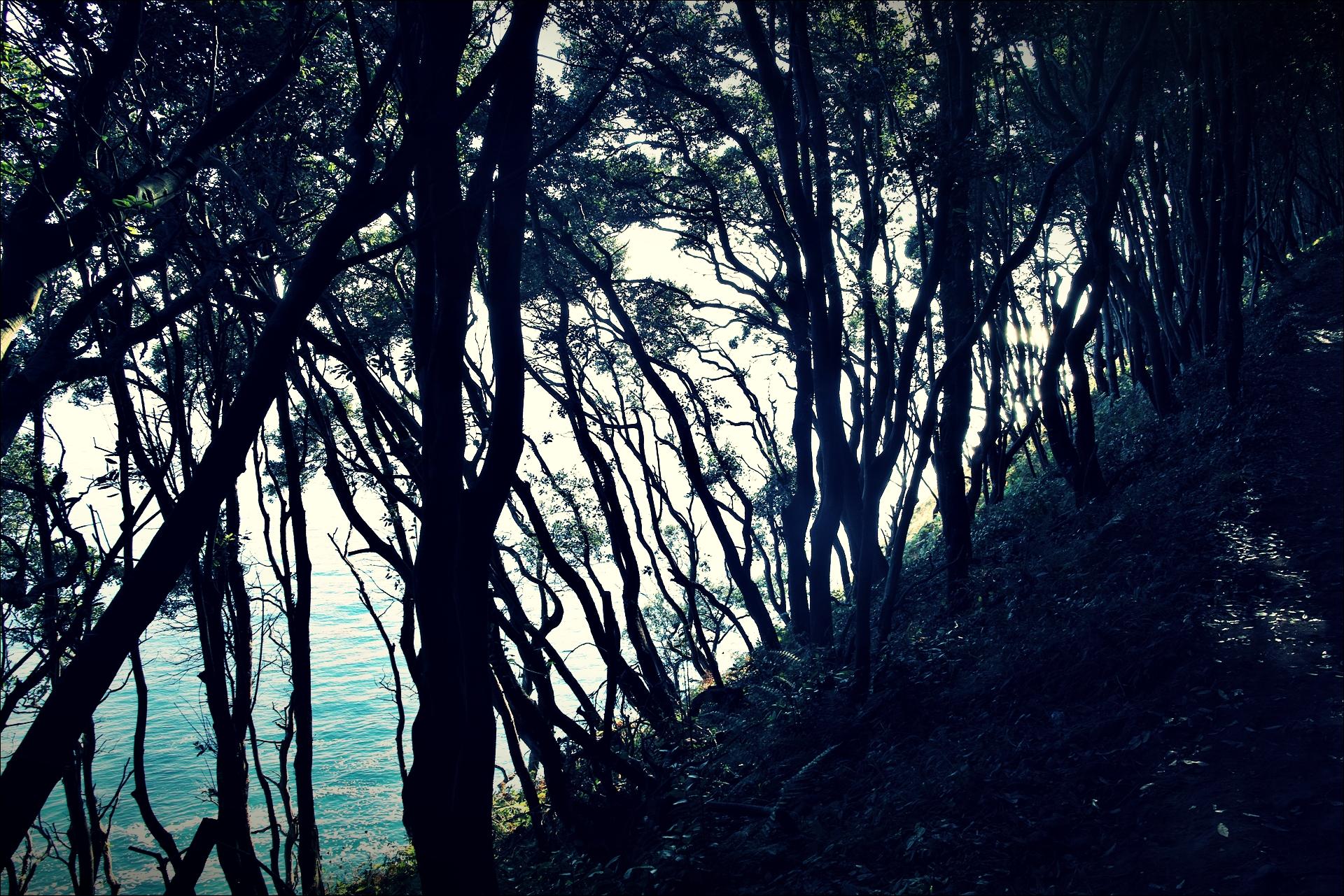 나무 사이로 보이는 바다-'카미노 데 산티아고 북쪽길. 산토냐에서 노하. (Camino del Norte - Santoña to Noja)'