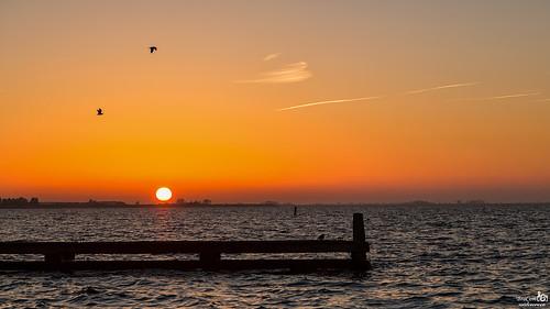 Free as a bird at sunset