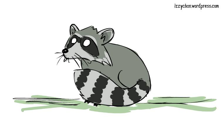 raccoon animal