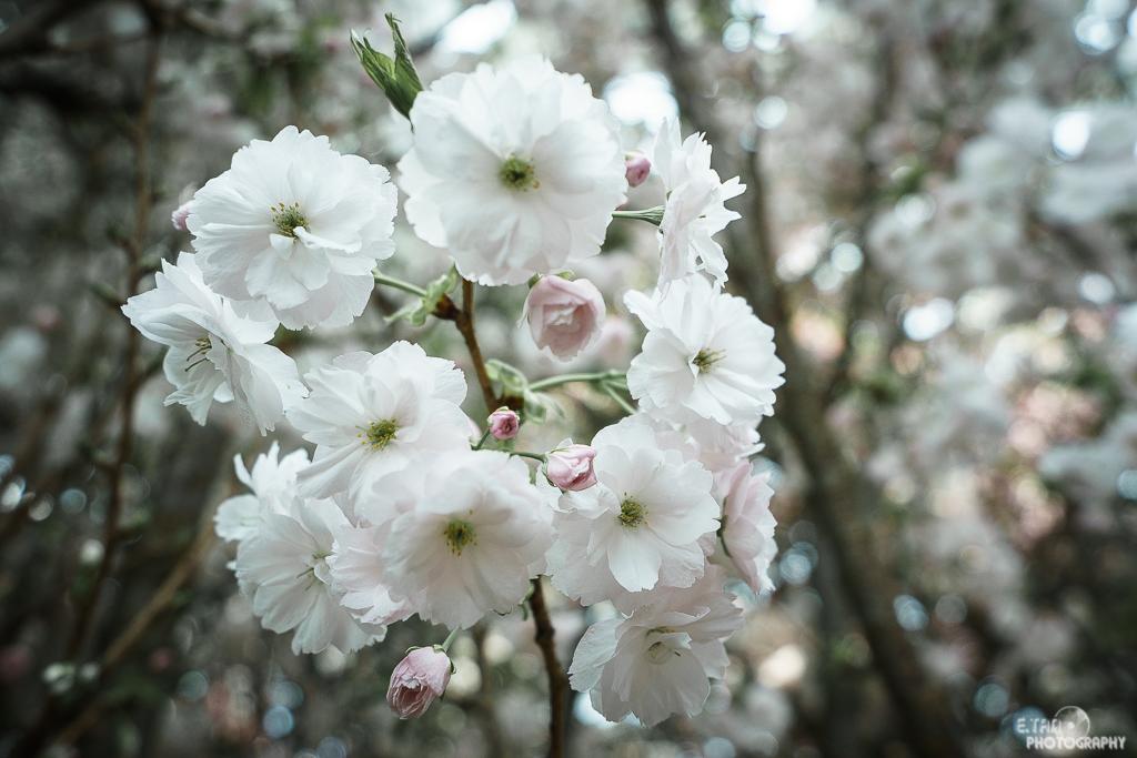 Blossom Bliss - 010