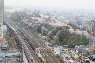 桜満開の飛鳥山公園とE3系+E2系