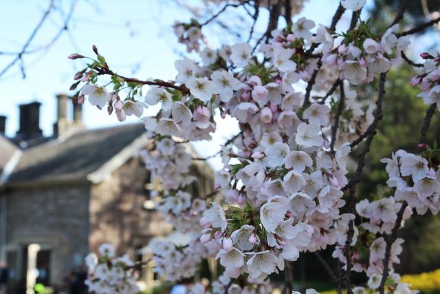 botanics flowers