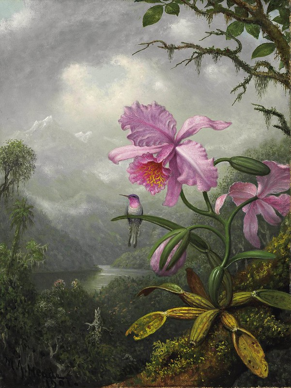 Martin Johnson Heade - Hummingbird Perched on the Orchid Plant (1901)