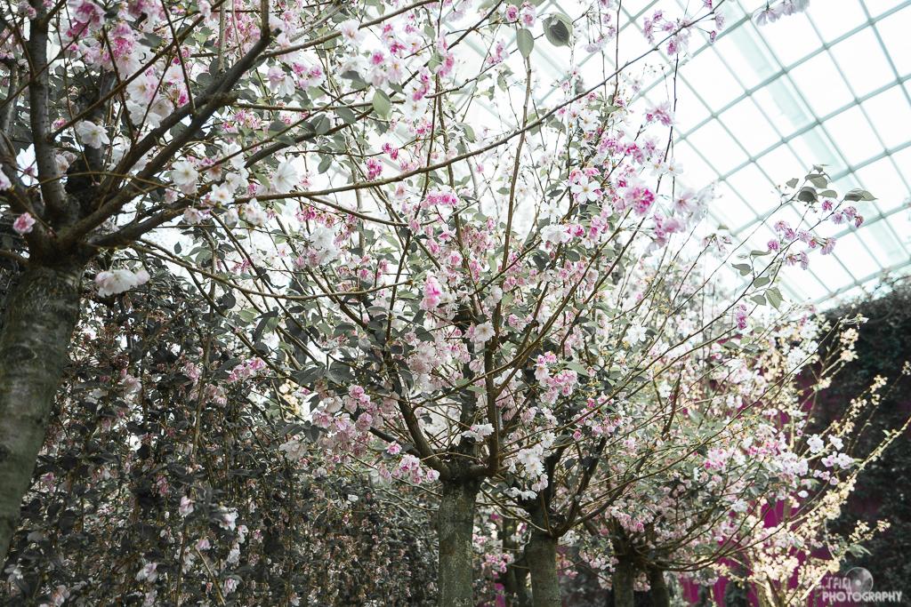 Blossom Bliss - 003