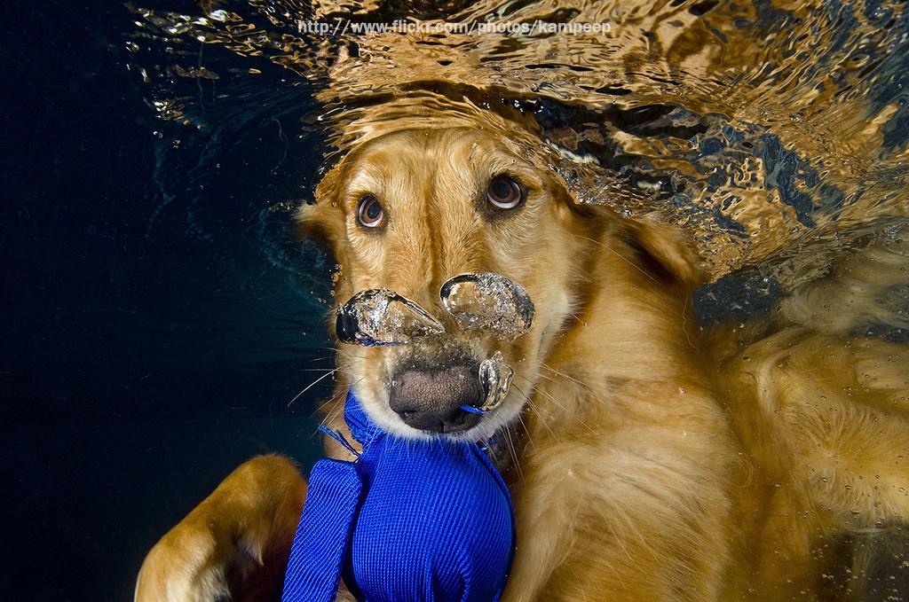 So Cute Dog Underwater Cute Dog Underwater Kampee