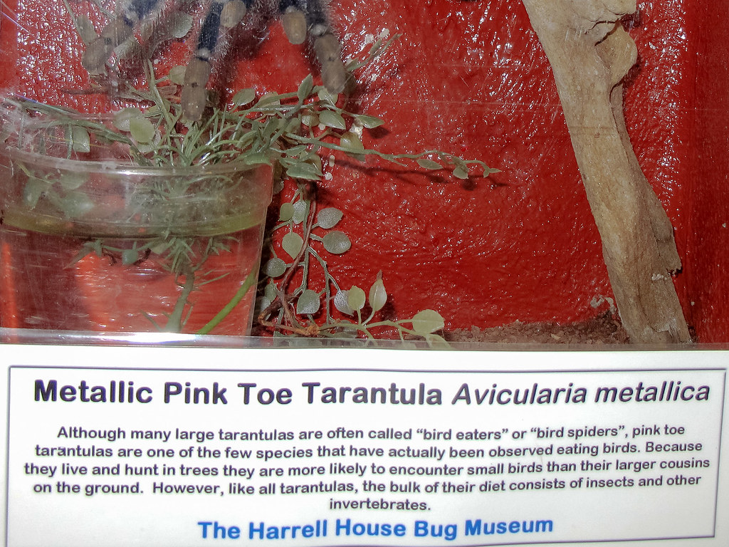 Harrell House Of Natural Oddities And Bug Museum