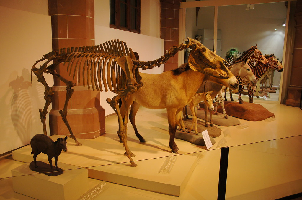 Natural History Museum Mainz