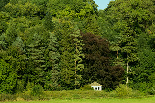 20150906-58_Lathkill Dale Summerhouse Arboretum-esque