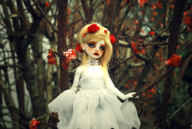 [Planetdoll MiniRiz] Red forest (update) P3 - Page 3 32750363832_31eae2d2f8_z