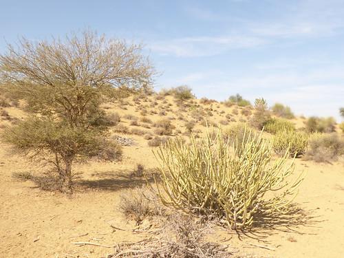 jaisalmer-jr 1- etape 1-dunes (1)