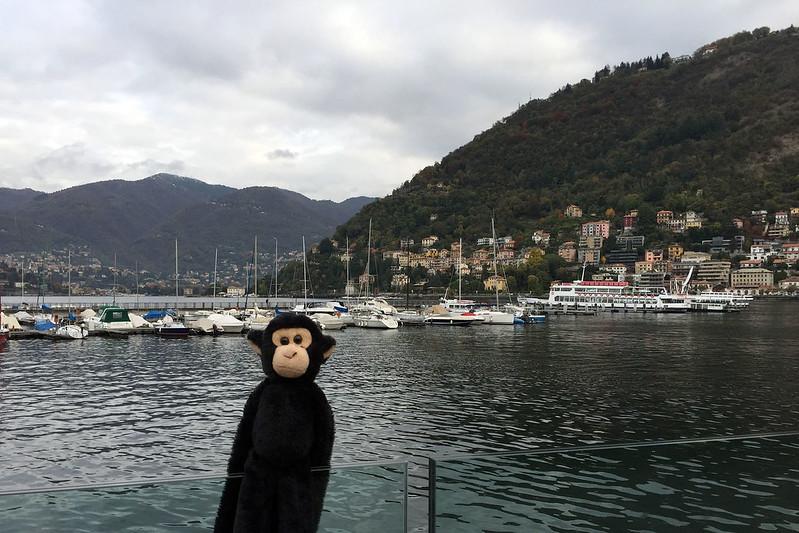 Monkey in Como