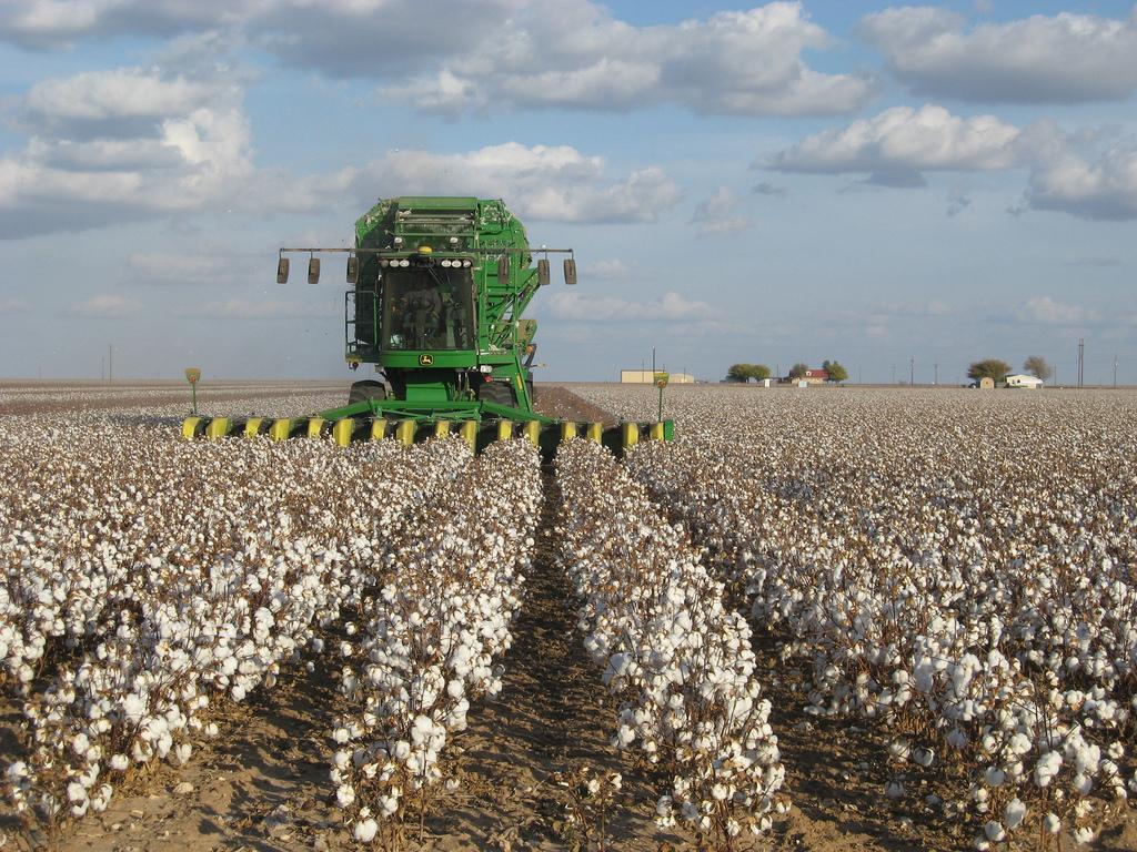 棉花收成。圖片來源:Kimberly Vardeman (CC BY 2.0)。