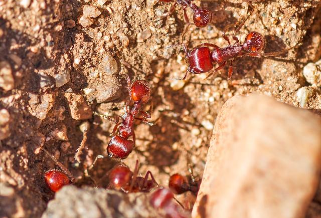 Ant-18-7D1-040417