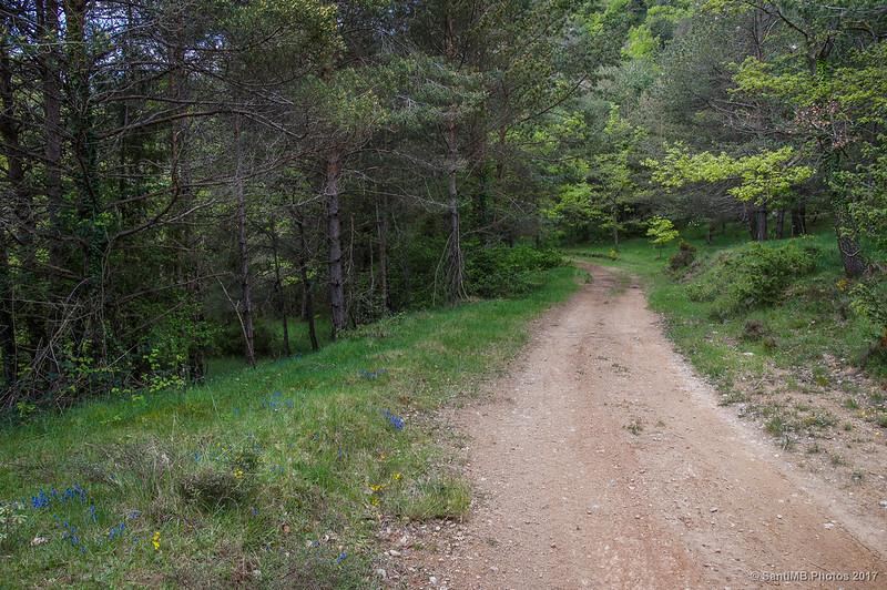 Entrando en el bosque tras pasar el Pla Magre