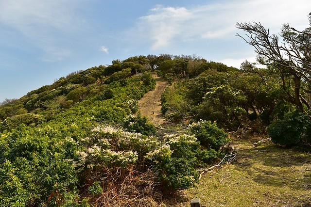 伊豆山稜線歩道 日帰り登山