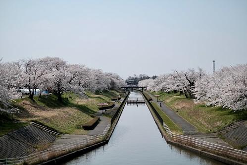 sakura memory 2017 3