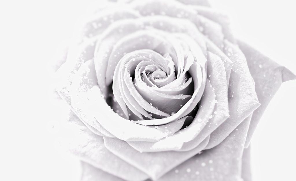La Fleur Blanche Electrolite Photography Flickr