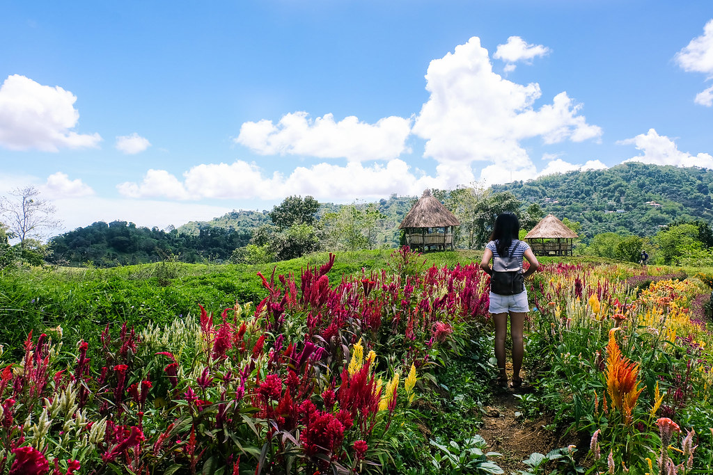 Tieza Botanical Garden-5