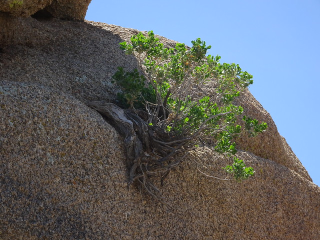 Growing in Rock