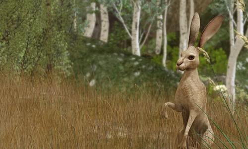 Anansi: Jack Rabbit