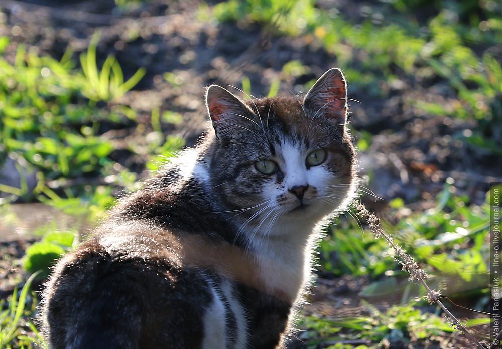 20170401_komarovo_cat_001