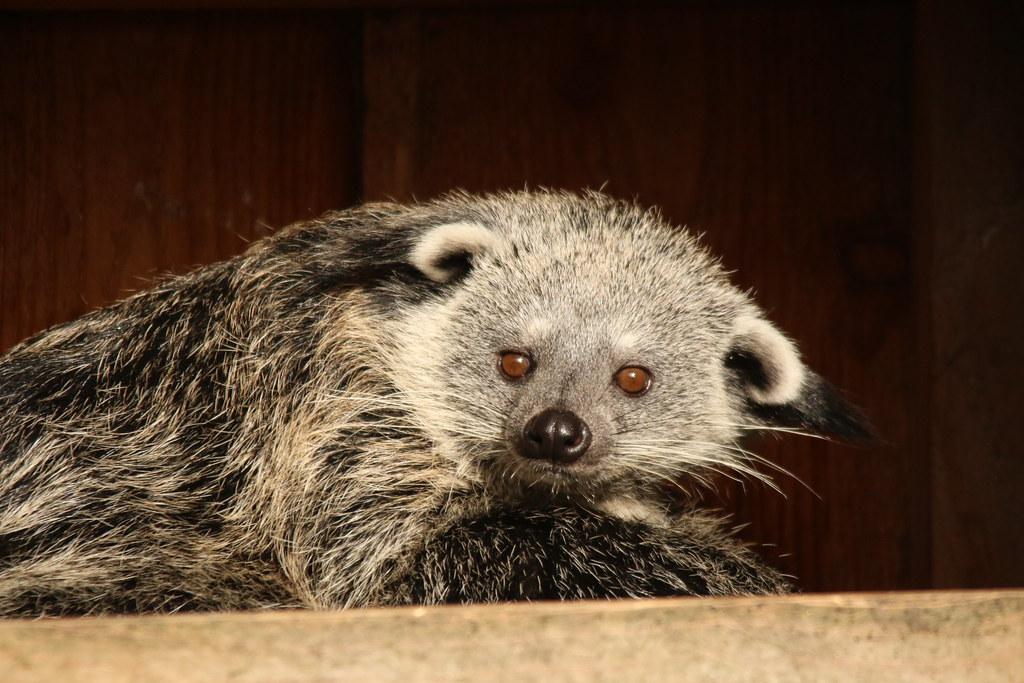 Zoo de la Boissère du Doré 33085099946_a806438beb_b