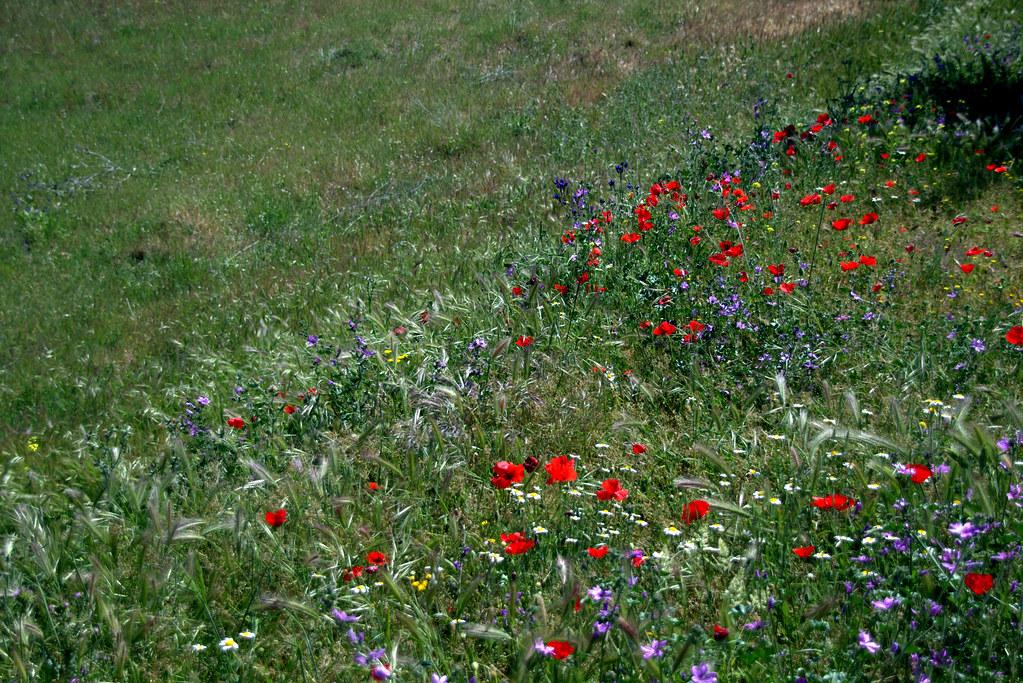 Campos de Batres en mayo