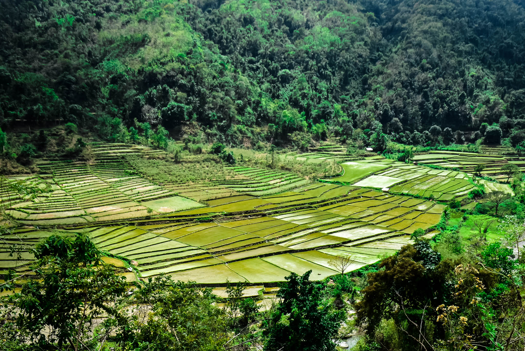 kili rice terraces (1 of 1)