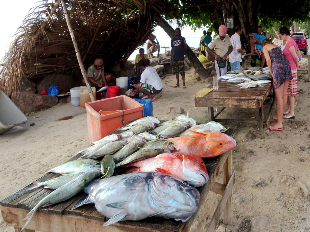 Beau Vallon Fish Market Red Snapper And Other Species