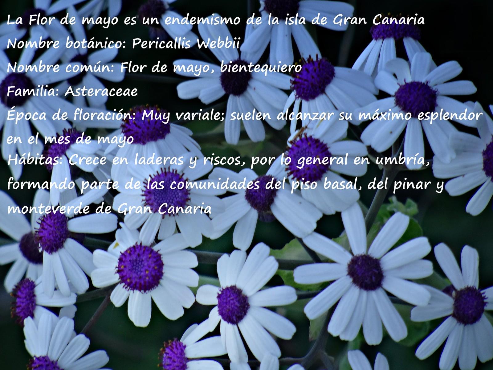 8 Ficha del Flor de mayo