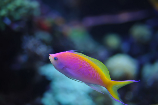 Beautiful sea creature...