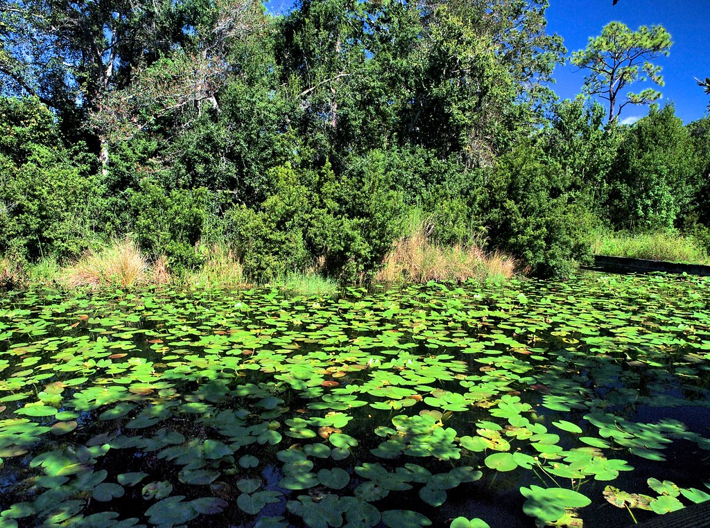 Lily Pads Florida Botanical Gardens Largo Fl Cathy Scola Flickr