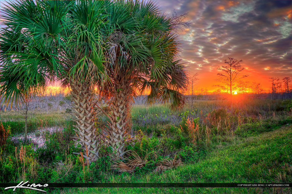 Palm Trees At Sunset Palm Beach Gardens Wetlands Two Beaut Flickr