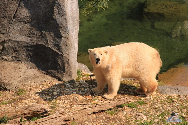 Tierpark Schönbrunn 29.04.2017 133