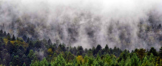 vosges mist | by DavidPennyWriting