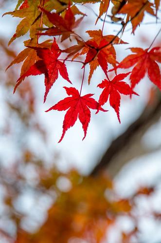 紅葉狩り - 東山公園 10