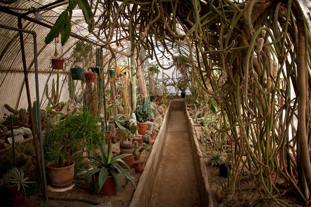 ... Inside The Cactarium   Moorten Botanical Garden   Palm Springs,  California | By ChrisGoldNY
