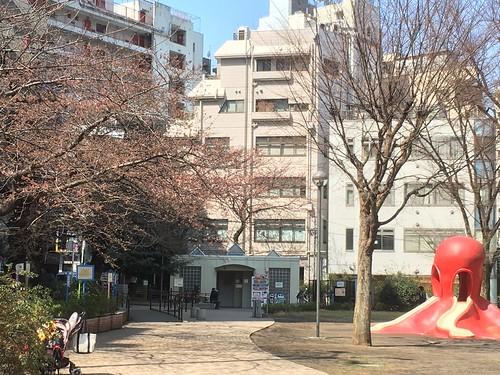 タコ公園の桜 2017.3.28 午前