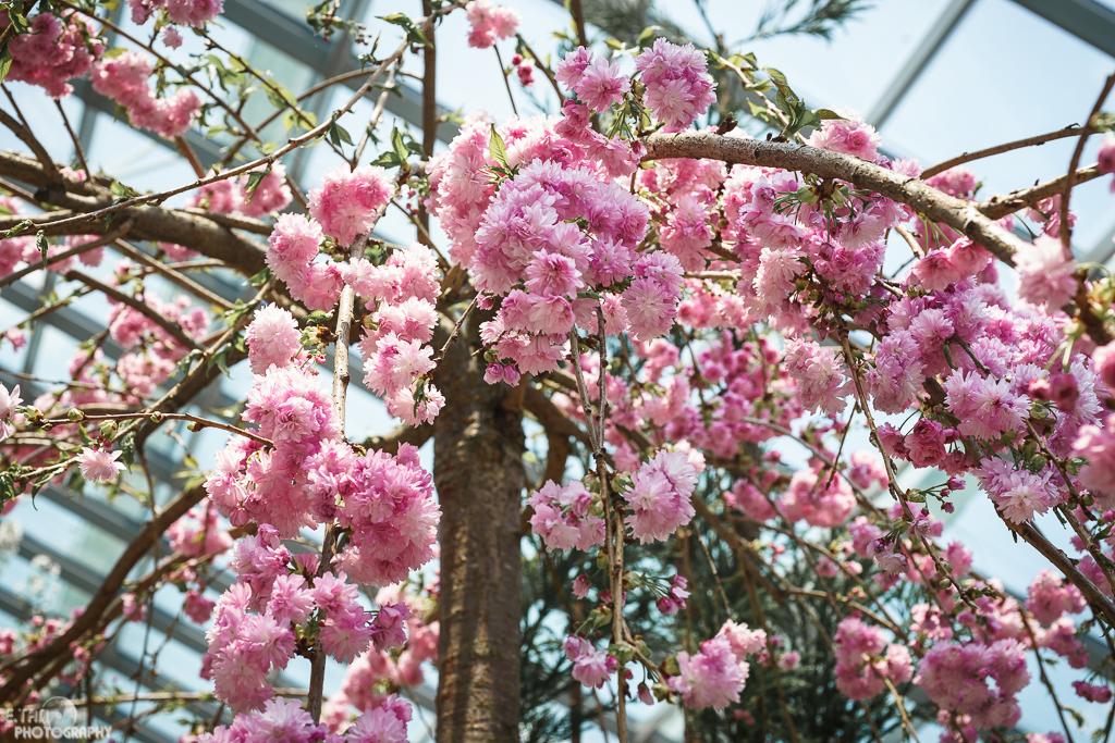 Blossom Bliss - 009