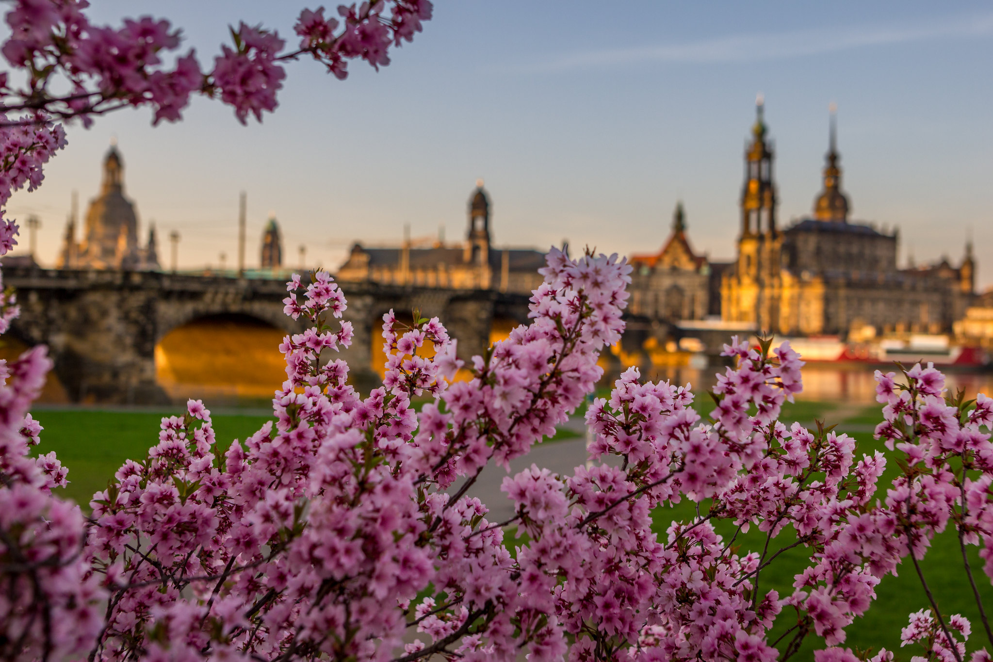 Dresden - a look trough blossom
