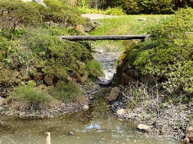 龍寶寺 池