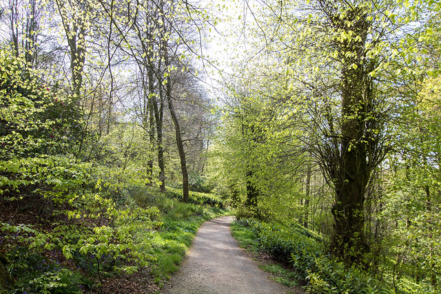 Lime trees in April, Stourhead