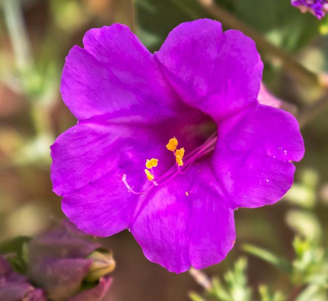 Flower-62-7D2-040817